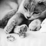 kitty-rings-happypp_w920_h613