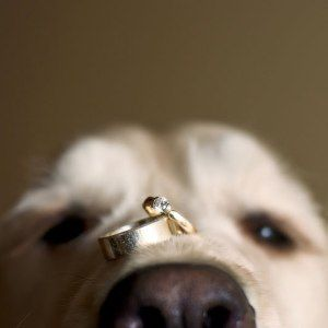 dog-with-wedding-rings