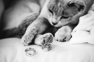 Kitty-+-Rings-happy(pp_w920_h613)